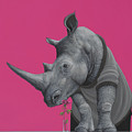 Rhino by Jasper Oostland