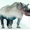 Rhino  by Karlo Agfa