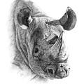 Rhino by Lorrisa Dussault