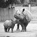 Rhino Mom And Baby by Jennifer Craft