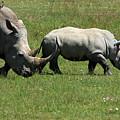 Rhino Mother And Calf - Kenya by Aidan Moran