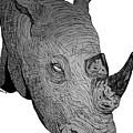 Rhino by Nick Gustafson