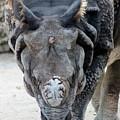 Rhinoceros by Mesa Teresita
