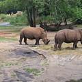Rhinoceros by Sandra Winiasz