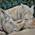 Rhinos by Sam Davis Johnson