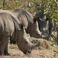 Rhinos,  Zambia by Jennifer Wheatley Wolf
