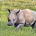Rhinosceros by Marcia Colelli