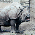 Rhinoceros And Baby by Donna Brown