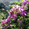 Rhodes Greece Flowers by Brett Winn