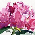 Rhododendron by Linda Hoover