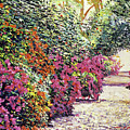 Rhododendron Pathway Exeter Gardnes by David Lloyd Glover