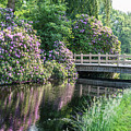 Rhododendrons And Wooden Bridge In Park by Compuinfoto