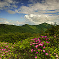 Rhododendrons On The Blue Ridge Parkway by Reid Northrup