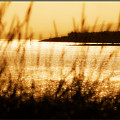 Rhos Point Viewed Through Beach Grass by Mal Bray