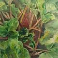 Rhubarb Spy by Michelle Roise