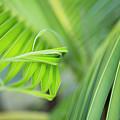 Rhythm Of A Palm Frond by Charmian Vistaunet