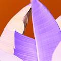 Ribbed In Violet by Florene Welebny