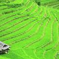 Rice Field Terraces by MotHaiBaPhoto Prints