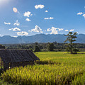 Rice Fields Of Thailand by Nomadic Ninja Negativs