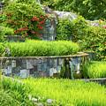Rice Garden by Wim Lanclus