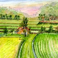 Ricefield Panorama by Melly Terpening