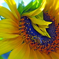 Rich In Pollen by Gwyn Newcombe