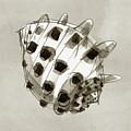 Ricinus Drupe - Back by Judith Kunzle