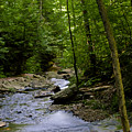 Ricketts Glen 3 by Christina Durity