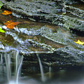 Ricketts Glen 4 by Christina Durity