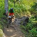 Ride Through The Woods #51 by Matt Helm