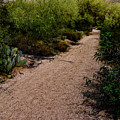 Ridge Trail No2 by Mark Myhaver
