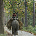 Riding An Elephant by Lindley Johnson