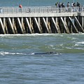 Right Whale At Sebastian Inlet by Bradford Martin