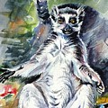 Ring-tailed Lemur by Kovacs Anna Brigitta