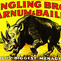 Ringling Brothers Barnum And Bailey Circus by Bill Cannon