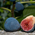 Ripe Figs by Jim DeLillo