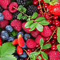 Ripe Of  Fresh Berries by Anastasy Yarmolovich