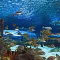 Ripley's Aquarium by Jill Lang