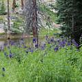 Ripples Behind Wildflowers by Weathered Wood