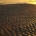 Ripples In The Sand Low Tide Golden Sunset by James BO Insogna
