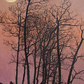 Rising Of The Moon  by Barbara Barber