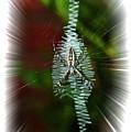 'ritin' Spider by Gary Adkins