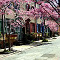Rittenhouse Square Neighborhood by Andrew Dinh