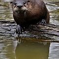 Rive Otter by Dwight Eddington