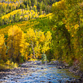 River And Aspens by Inge Johnsson