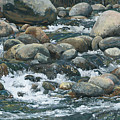 River At Sierra Subs by Nadi Spencer