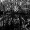 River Bank Palmetto by Marvin Spates