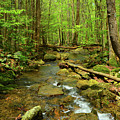 River Crossing On The Maryland Appalachian Trail by Raymond Salani III