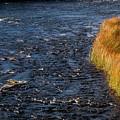River Edge by Bob Phillips
