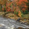 River Foliage by Jane Luxton